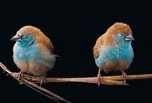 tweet.tweet. / by la la land