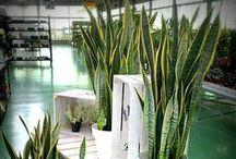 Plantas de Interior Verde / Colección de plantas de interior verdes ofertadas en nuestro centro de jardinería.