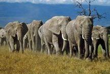 TA♥Africa / Tanzania, Sudafrica e Namibia: gli animali non sono mai stati così vicini. Scopri i tour safari di Travel Age
