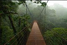TOUR TA - Costa Rica / Un tour alla scoperta di questa terra unica al mondo. Destinazione perfetta per ammirare il ricco patrimonio floreale e faunistico e scoprire la pura vida costaricana. Lasciati ispirare...