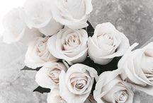 Blooms.