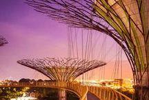 Singapore Slings