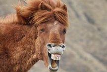 Horse humor / Laugh out and loud, lol, horses sense of humor