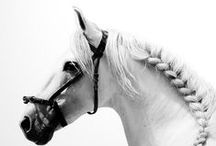 Horse hairdo / Horse braiding manes and tails, fancy stuff and tutorials