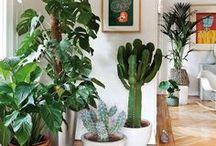 °Idées° Plantes