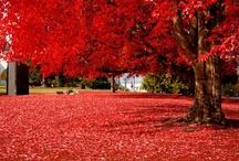 Adorable Autumn / by Carmin Simone