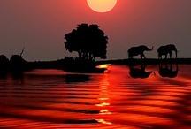 Ele my baby Elephants / by Carmin Simone