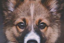 Hundar. / Man's best friend.
