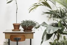 Hus: Plantor. / Make it green in your home.