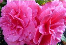 Stunning flowers