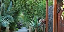 Gardens & Terraces & Patios / tropical