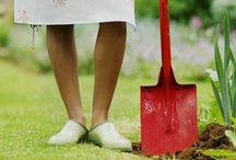 Gardening Tips & Tricks / Rainbow Gardens is here to help with all of your gardening  questions. Here are a few tips and tricks to help you at home.