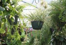 The Happy Gardener Blog
