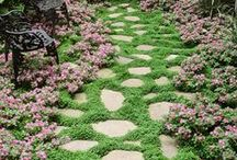 Garden Paths and Borders