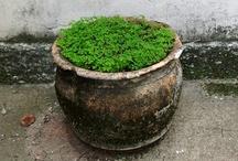Planta devquintal