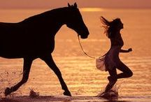Horses / by Valentin Brekher