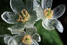 Ljusa växter/vita alba / Bright plants / white alba. / by Kerstin Färlin