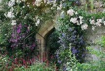 Záhrada (garden)