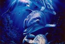 More a v mori / sea,under the sea