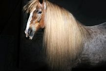 My horse models / My photos