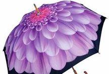 Dahlia Umbrellas