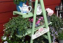 jardins pequenos / plantas e flores
