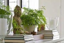 Plants+Style