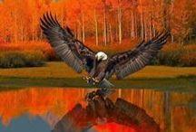 Águila / Fuuu!