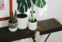 Plants Idea