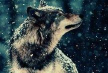 Animals...♡