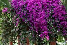 flowers / by Kathleen Hames