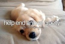 Before I die young...