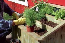 Kjøkkenhage / Dyrk din egen mat i hagen