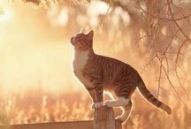 Cats / Kittn
