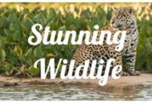 Stunning Wildlife