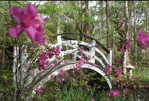 Sassy South Carolina / Share my visit to South Carolina - thanks for following my board!