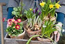 Frühling auf dem Land / Die schönsten Frühlingsimpressionen auf einen Blick