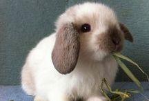 Hasen und Kaninchen / Viele süße Mümmelmänner