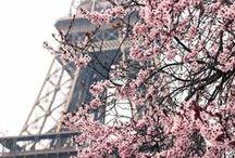 Cherry Blossom ♡