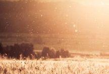 Altweibersommer / Milde Temperaturen, Laub, das in warmen Tönen leuchtet und feine Spinnweben, die durch die Lüfte schweben