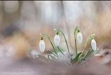 Erste Blüten / Wir freuen uns schon auf die ersten Blüten...