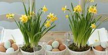 Frühling bei Tisch / Schönes Geschirr und frühlingshafte Accessoires für den gedeckten Tisch