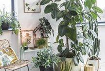 Raumtanz-Tend: Dschungel in der Wohnung / Urban Gardening
