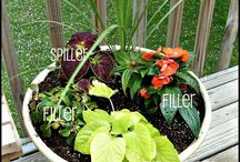 Container gardens / by Tammy