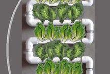 Hydroponic/Gardening