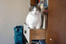 Kedi Fotoğrafları / En Güzel Kedi Fotoğrafları Ve Kedi Resimleri kedifotograflari.com'da. Kedi Sahiplerinin Fotoğraflarını Paylaştığı Bir Sosyal Paylaşım Sitesi..