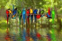 Birds / Madarak