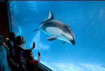 Favourite attractions / Great zoos, aquaria, theme parks and museums we have visited.
