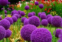 Trees & Botanical Gardens / #Trees, #Plants #Gardens, #Botany #flowers #gardening #tree #landscape #arboretum #flower #dendrology #botanical #garden