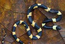 Reptiles / #reptile #herptology #snake #lizard #crocodile #alligator #chameleon #wildlife #gecko
